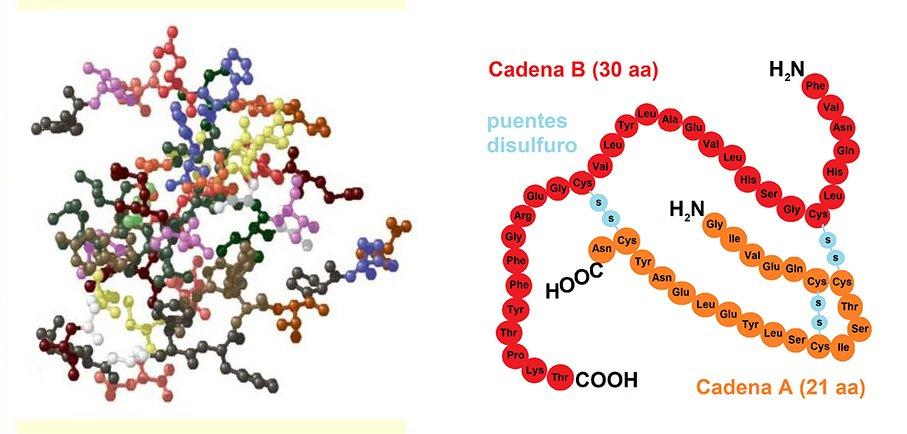 molécula da insulina
