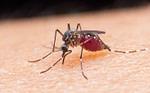 Malaria causas sintomas e tratamento em moçambique, malária grave