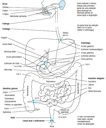 funções do trato gastrointestinal